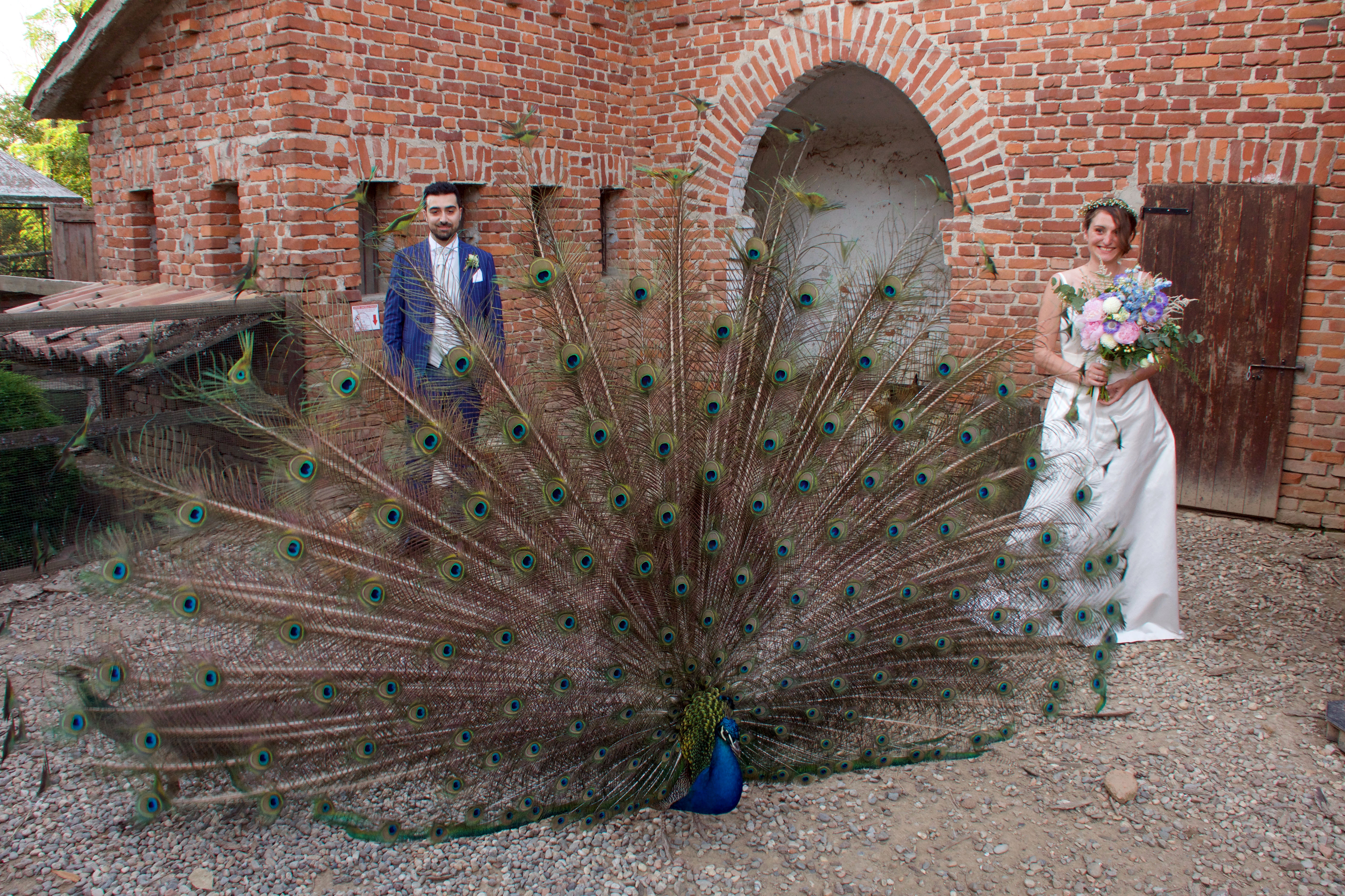 Bride and groom with baby pink wedding bouquet and peacock feathers